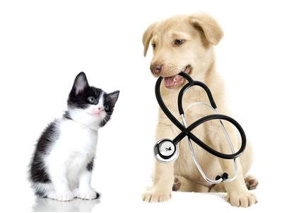 Wormign treatment for pets in Worcester Park